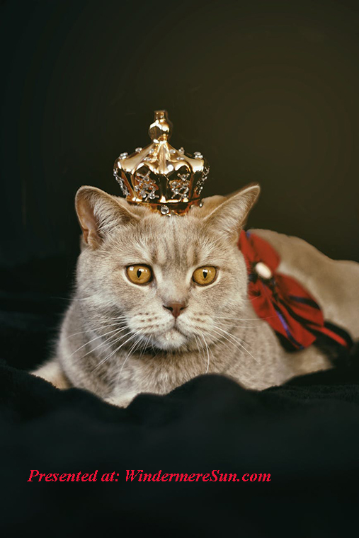 Pet of 7-11-2020, cat with crown, pexels-photo-1314550 final