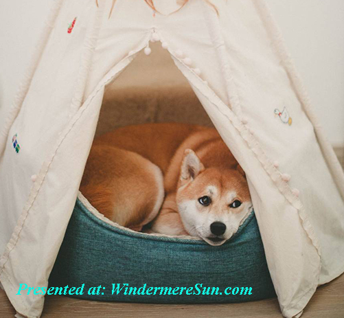pet of 7-25-2020, dog inside tent w dreamcatcher, pexels-photo-1839753 final short