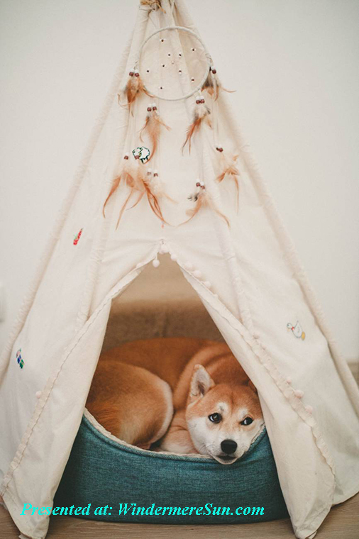 pet of 7-25-2020, dog inside tent w dreamcatcher, pexels-photo-1839753 final