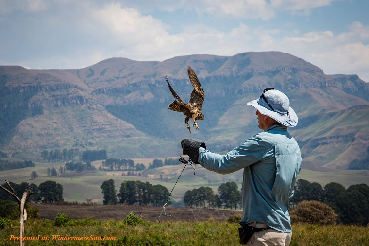 Falconer, bird and mountain, pexels-photo-3113124 final